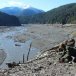 Elwha River Restoration, Elwha River Restoration: Revegetating the Elwha