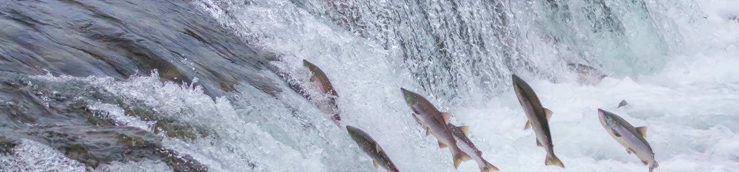 , Grant Round for Salmon Restoration & Protection